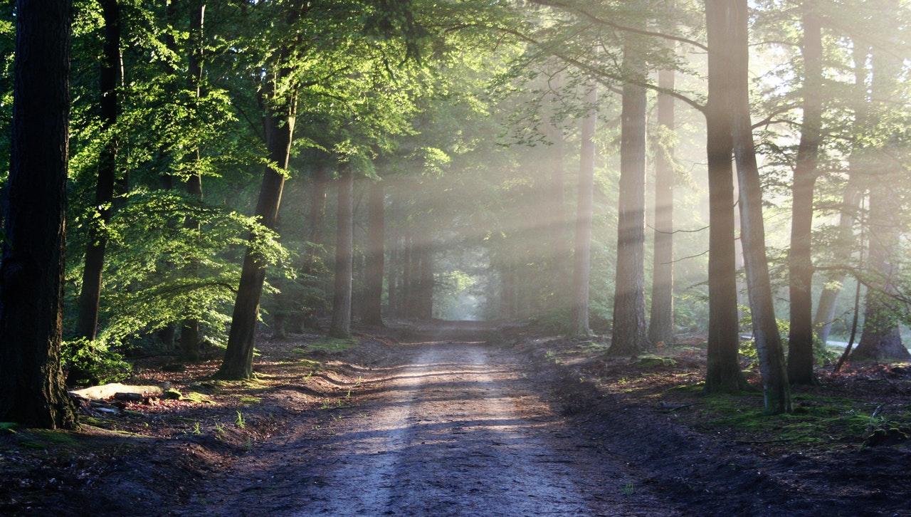 light-road-landscape-nature-35600